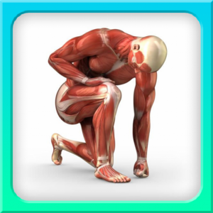 human anatomy 1.0 MOD APK For IOS & ANDROID